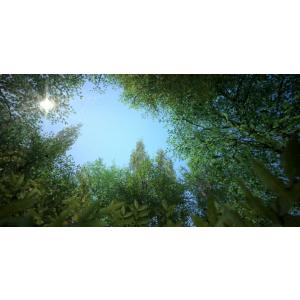 vbexteriors VB Plant Collection - Vol.1, Vol. 2 und Texture Trees